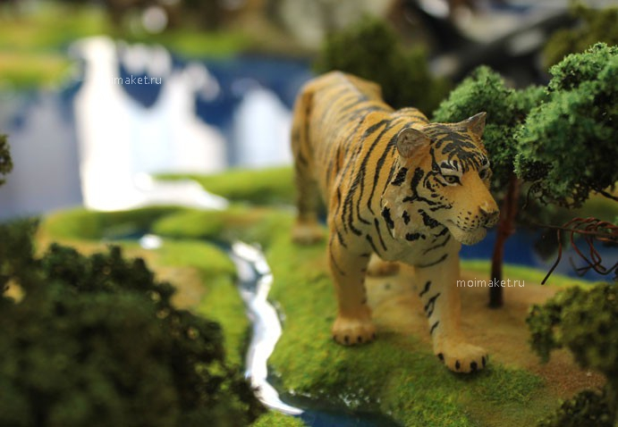 Tiger on the model